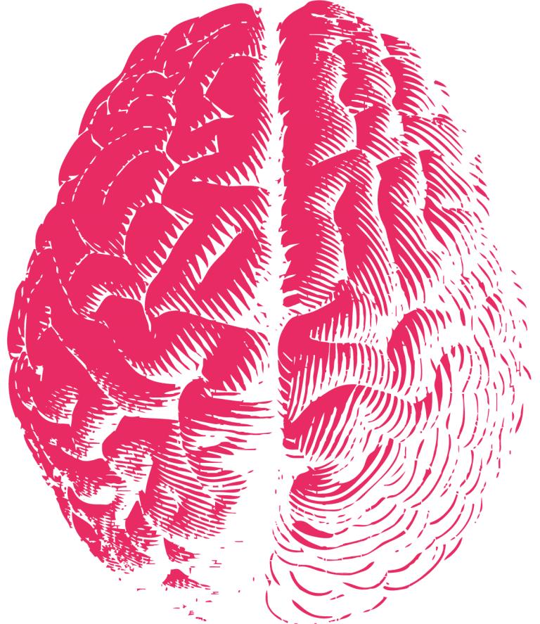 Pink Brain (Illustration)